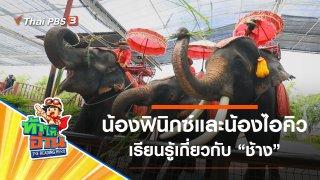 ช้าง : น้องฟินิกซ์และน้องไอคิว