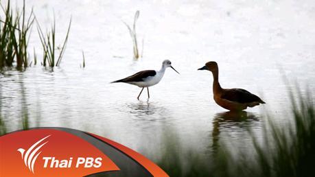 Nature Spy สายลับธรรมชาติ - นกน้ำทะเลน้อย