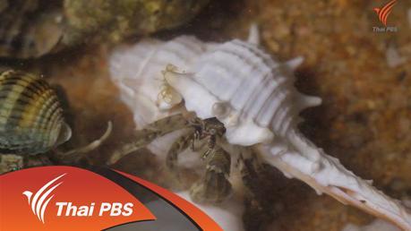 Nature Spy สายลับธรรมชาติ - ปูเสฉวนเปลี่ยนบ้าน