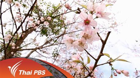 Nature Spy สายลับธรรมชาติ - ภูหินร่องกล้า ป่าสีชมพู