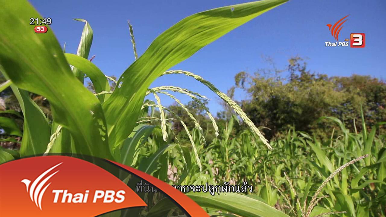 ที่นี่ Thai PBS - นักข่าวพลเมือง :  เครือข่ายเกษตรรวมตัวกันผ่านพื้นที่ตลาดนัดสีเขียว