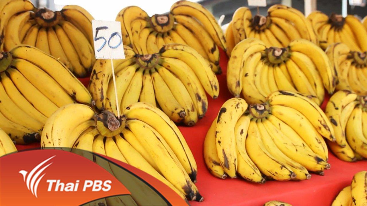 The North องศาเหนือ - กล้วย(ไม่)กล้วย
