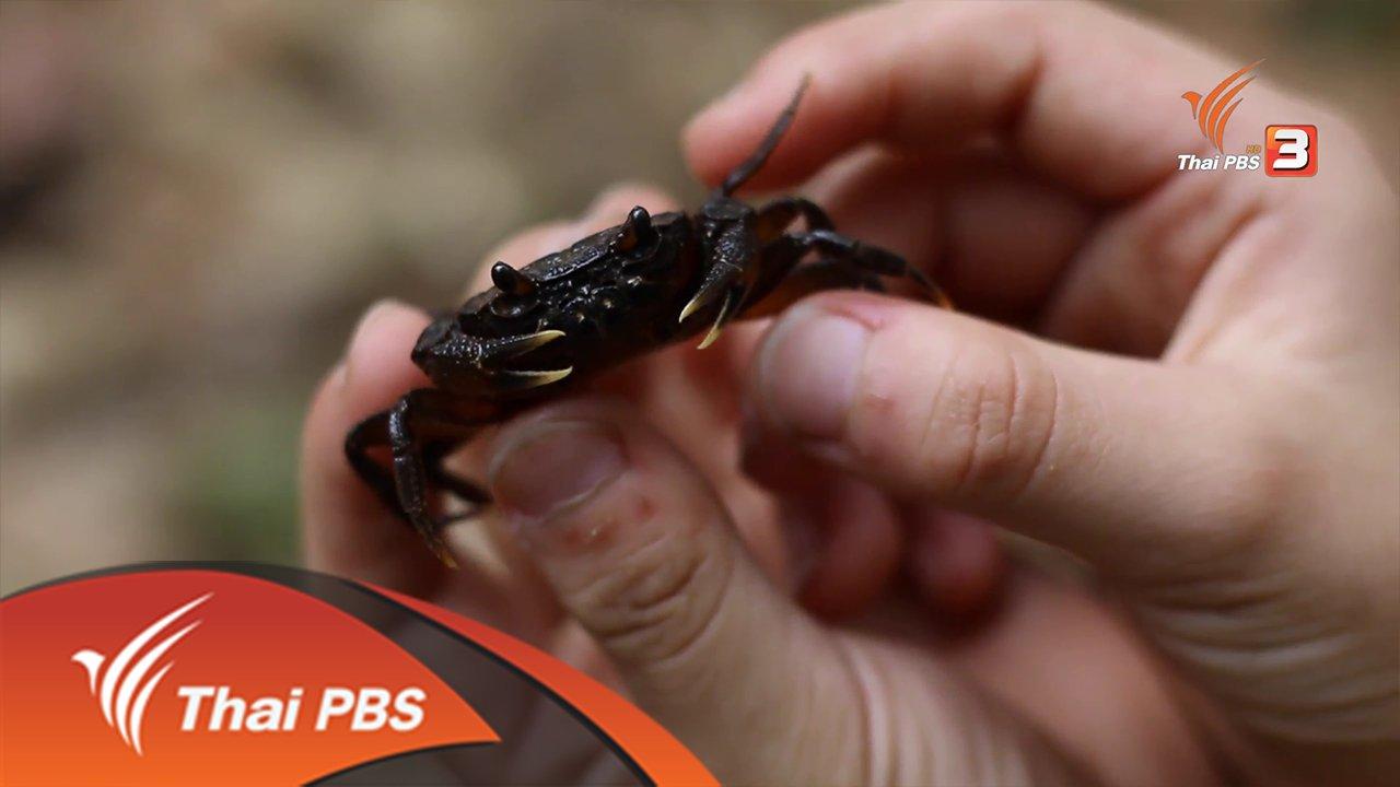 Nature Spy สายลับธรรมชาติ - ปูน้ำตกดอยสุเทพ
