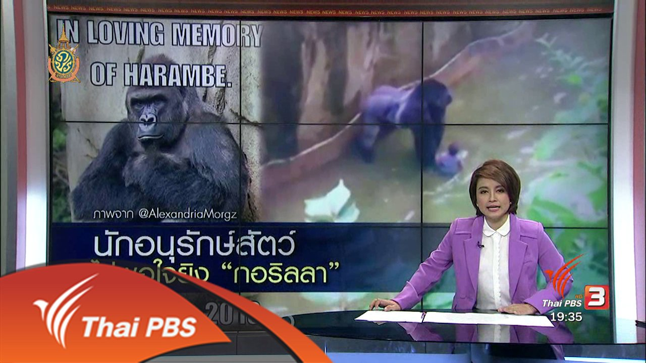 """ข่าวค่ำ มิติใหม่ทั่วไทย - วิเคราะห์สถานการณ์ต่างประเทศ : นักอนุรักษ์สัตว์ ไม่พอใจยิง """"กอริลลา"""""""