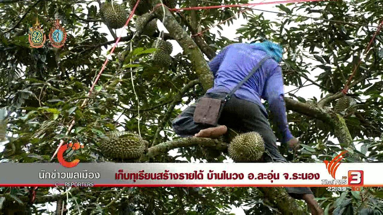 ที่นี่ Thai PBS - นักข่าวพลเมือง : เก็บทุเรียนสร้างรายได้ บ้านในวง อ.ละอุ่น จ.ระนอง