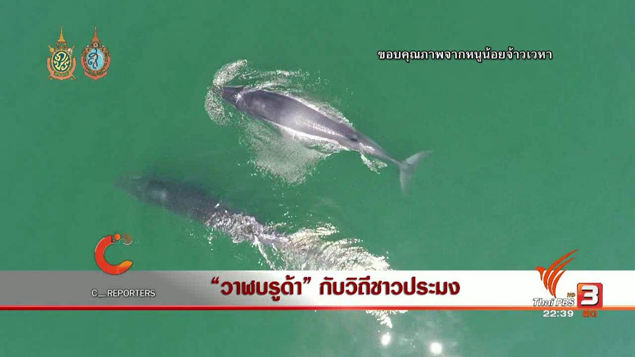 """ที่นี่ Thai PBS - นักข่าวพลเมือง : """"วาฬบรูด้า"""" กับวีถีชาวประมง"""