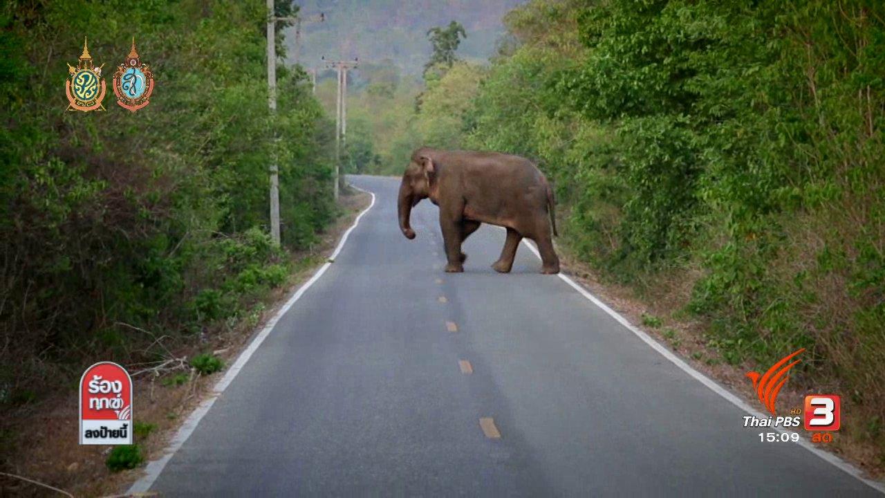 ร้องทุก(ข์) ลงป้ายนี้ - สาเหตุช้างป่ารุกที่ชุมชน