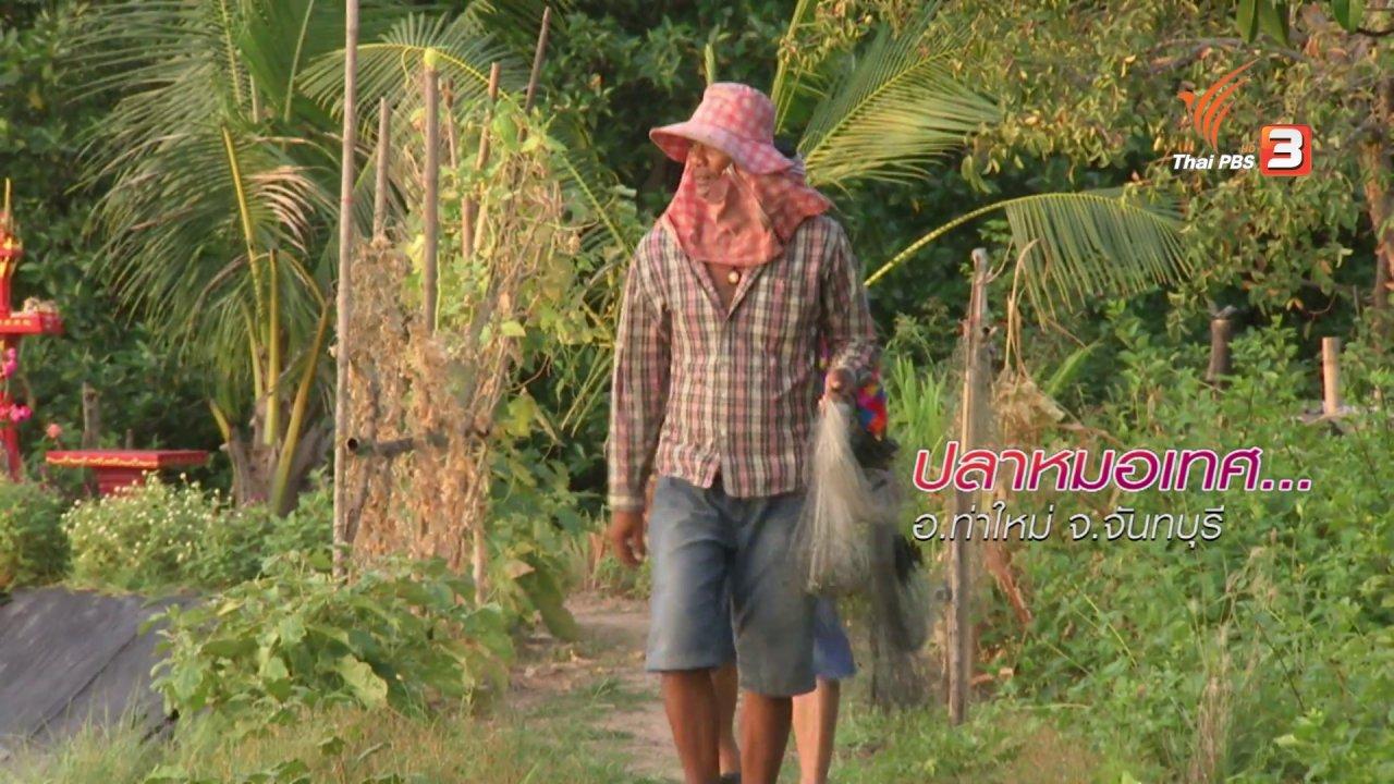 ข่าวค่ำ มิติใหม่ทั่วไทย - ตะลุยทั่วไทย : ปลาหมอเทศ