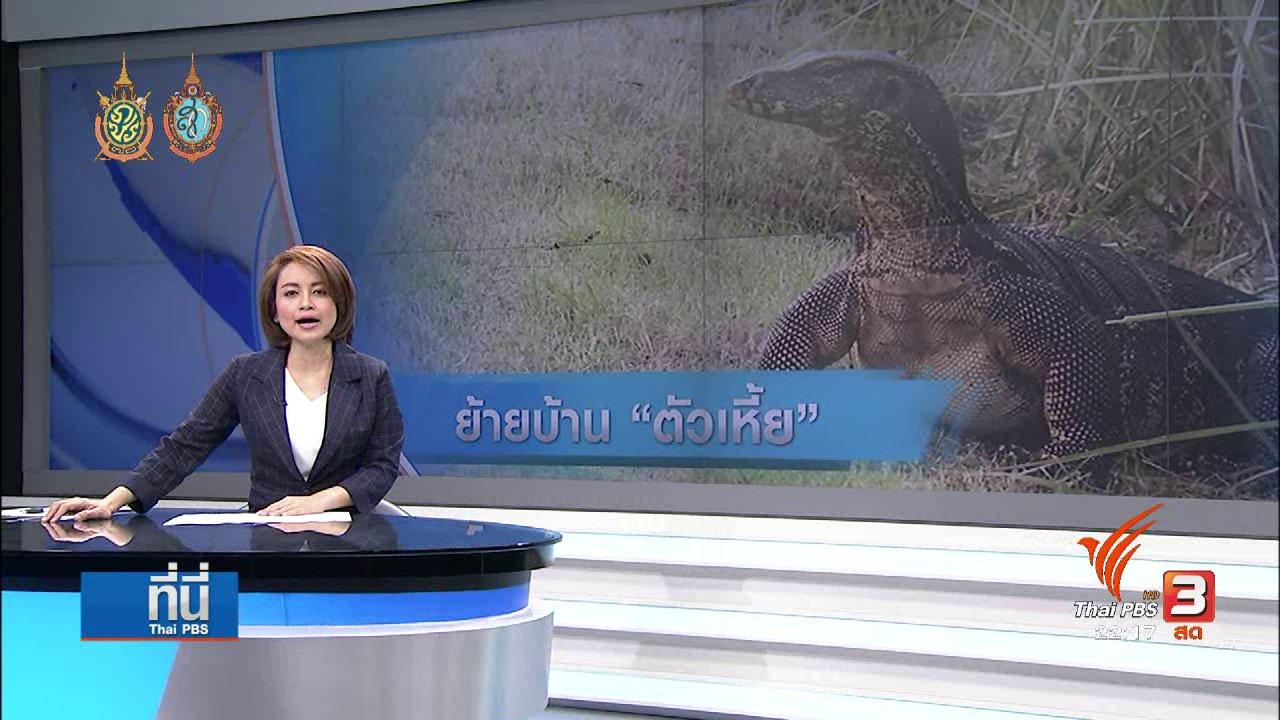 """ที่นี่ Thai PBS - ที่นี่ Thai PBS : กทม. เตรียมย้าย """"เหี้ย"""" สวนลุมพินีไปบ้านใหม่"""