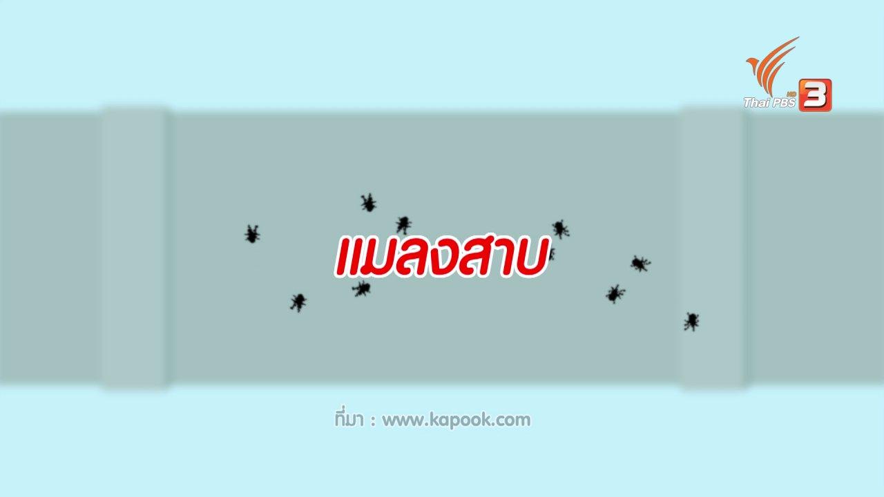 นารีกระจ่าง - กระจ่างจิต : ไล่แมลงสาบสูตรธรรมชาติ
