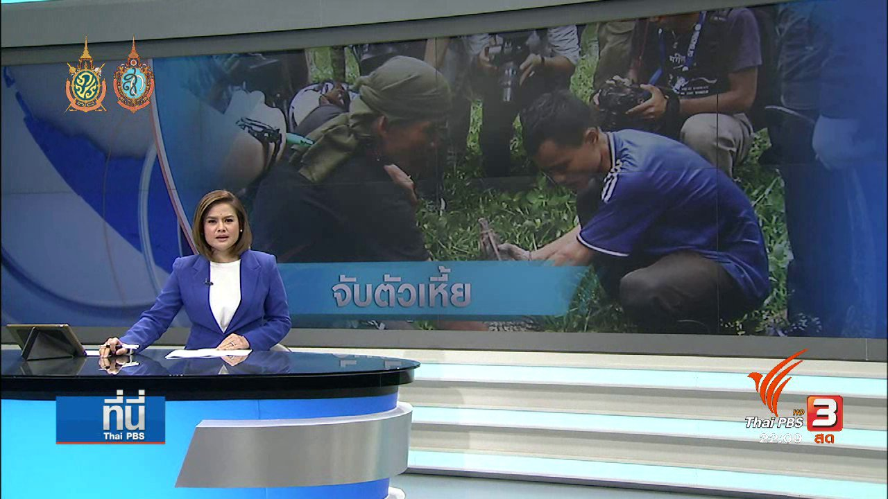 ที่นี่ Thai PBS - ที่นี่ Thai PBS : 7 ชั่วโมง จับเหี้ยสวนลุมพินี 40 ตัว