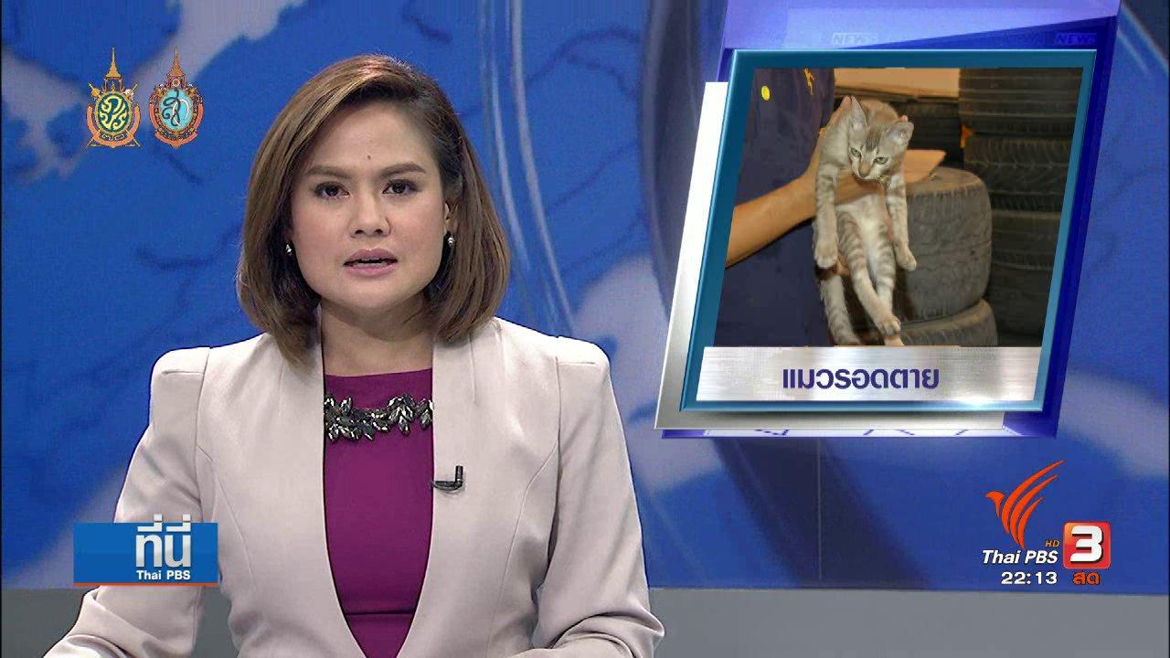 ที่นี่ Thai PBS - ชีวิตใหม่ แมวรอดตาย