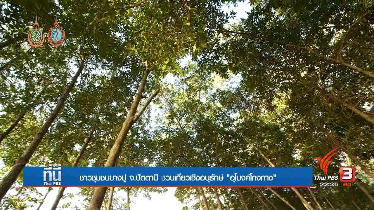 """ที่นี่ Thai PBS - Social Talk : """"อุโมงค์โกงกาง"""" ชุมชนสร้างรายได้จัดการท่องเที่ยว จ.ปัตตานี"""