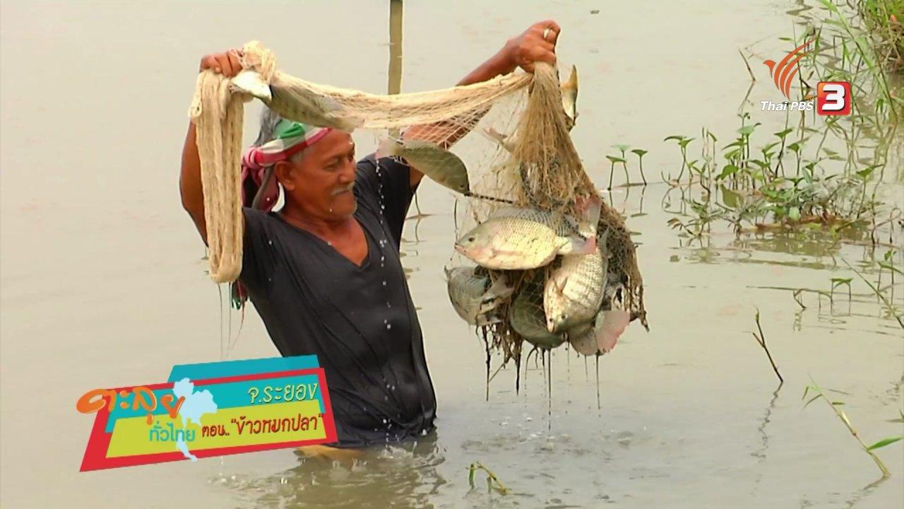 ข่าวค่ำ มิติใหม่ทั่วไทย - ข้าวหมกปลา