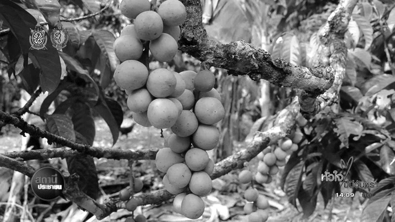 สถานีประชาชน - ไทยพีบีเอสช่วยเกษตรกรไทย จำหน่ายลองกองตันหยงมัส จ.นราธิวาส