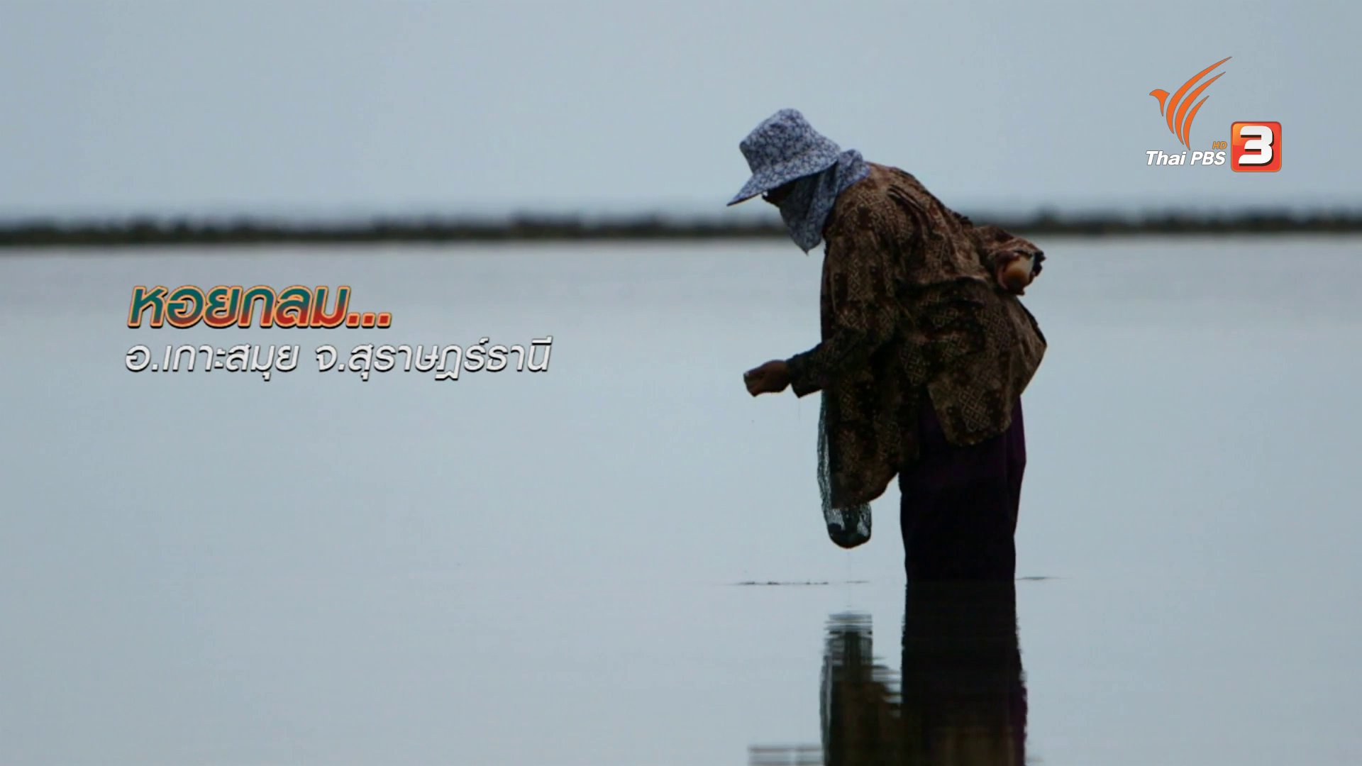 ข่าวค่ำ มิติใหม่ทั่วไทย - ตะลุยทั่วไทย : หอยกลม