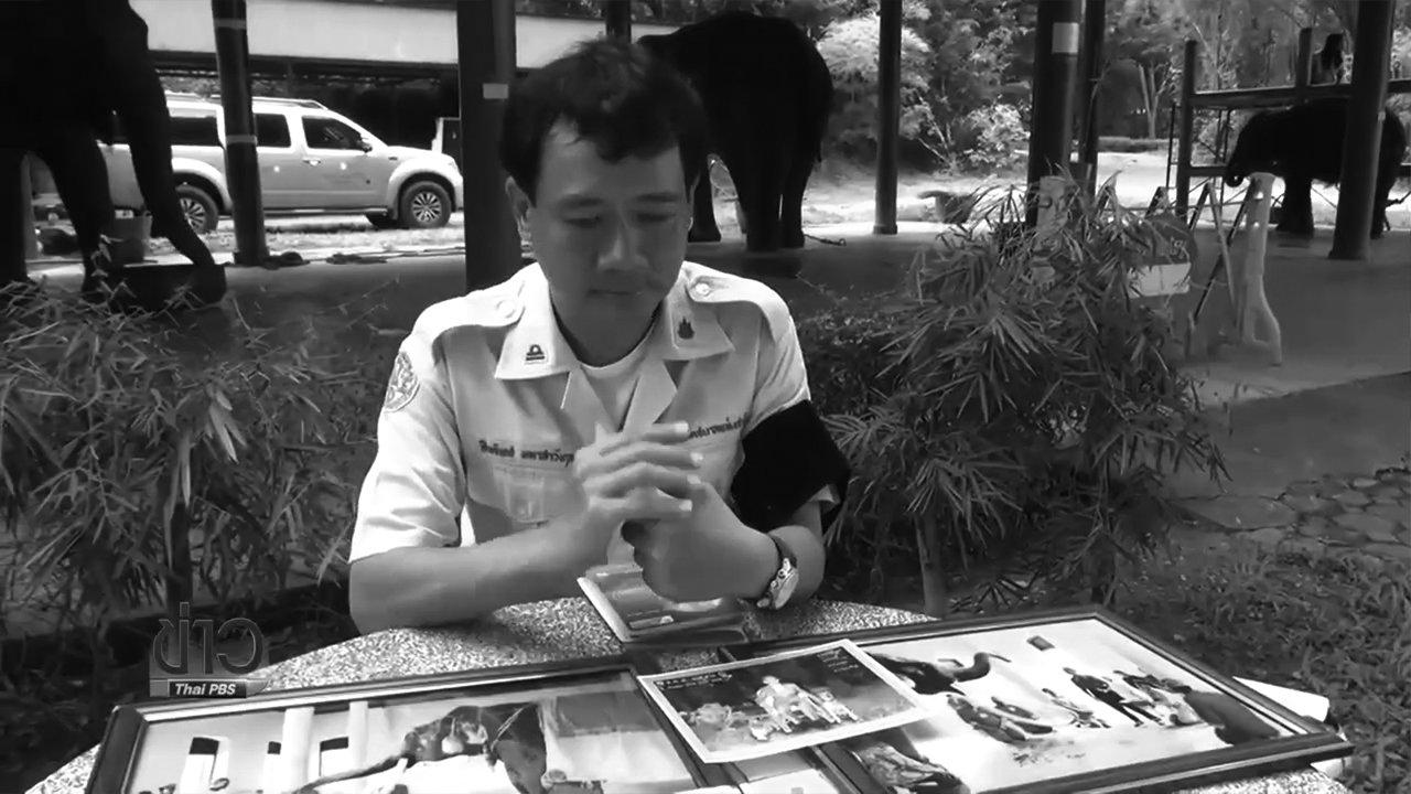 วันใหม่  ไทยพีบีเอส - หมอดูแลช้างในหลวงที่ลำปาง