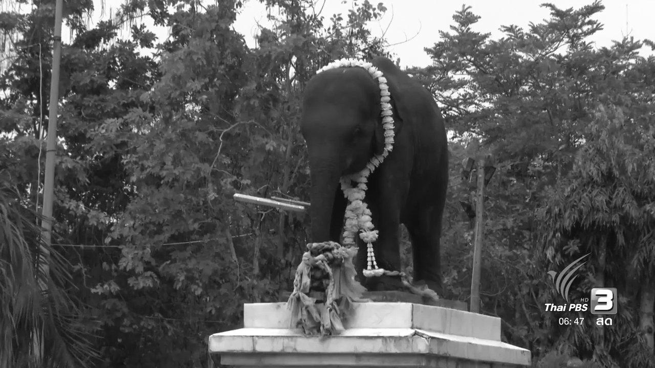 วันใหม่  ไทยพีบีเอส - ตามรอยช้างคู่พระบารมี
