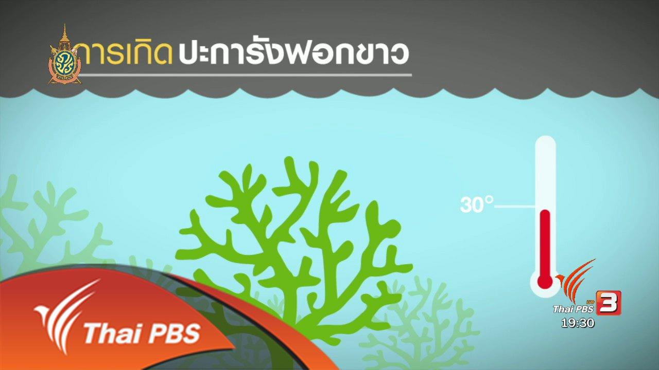 พลิกปมข่าว - วิกฤตปะการังฟอกขาว