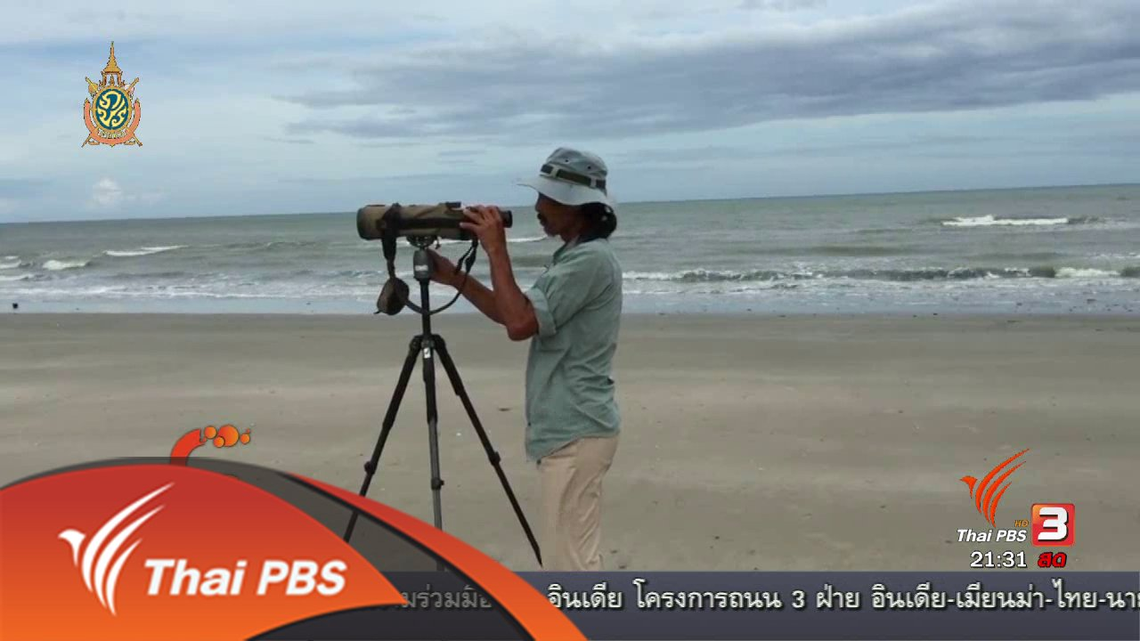"""ที่นี่ Thai PBS - นักข่าวพลเมือง : """"ลุงแดง"""" นักดูนกแห่งบ้านแหลมผักเบี้ย จ.เพชรบุรี"""