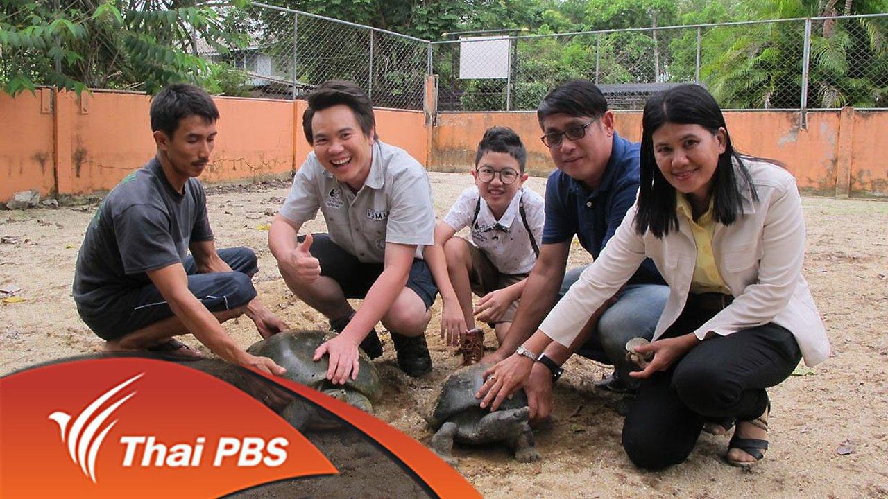 Animals Speak - เต่าไทยใกล้สูญพันธุ์