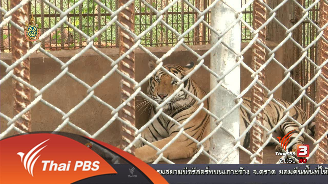คิดยกกำลัง 2 กับ COMMENTATORS - หลักฐานลักลอบค้าซากสัตว์ป่า ผ่านการย้ายเสือโคร่ง