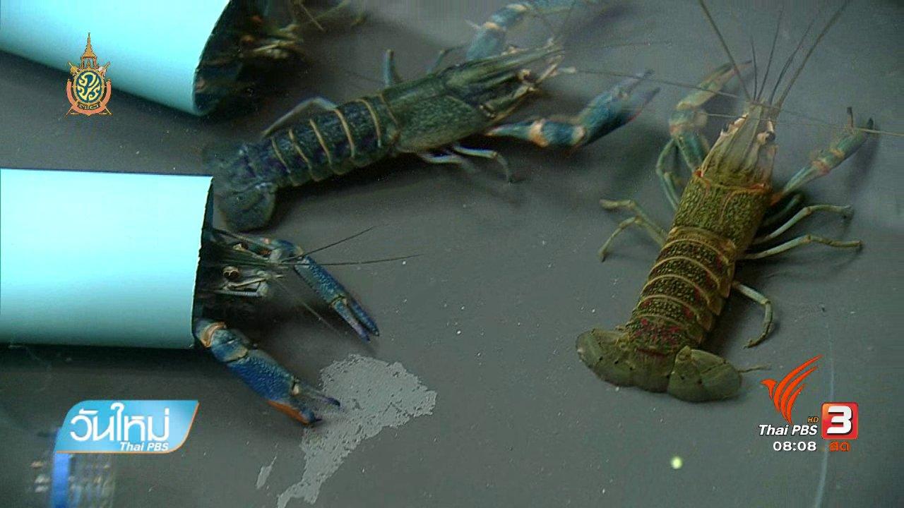 วันใหม่  ไทยพีบีเอส - ลงทุนทำกิน : เลี้ยงกุ้งก้ามแดงสร้างรายได้
