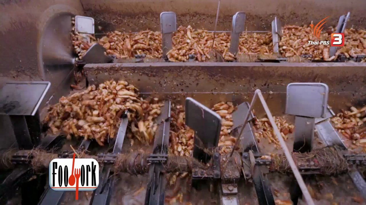 "Foodwork - Foodwork : กรรมวิธี ""แปรรูปมันสำปะหลัง"" เป็นสารให้ความหวานแทนน้ำตาล"
