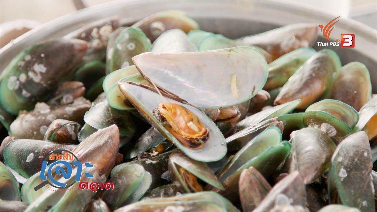 วันใหม่  ไทยพีบีเอส - สายสืบเจาะตลาด : สำรวจราคาหอยแมลงภู่