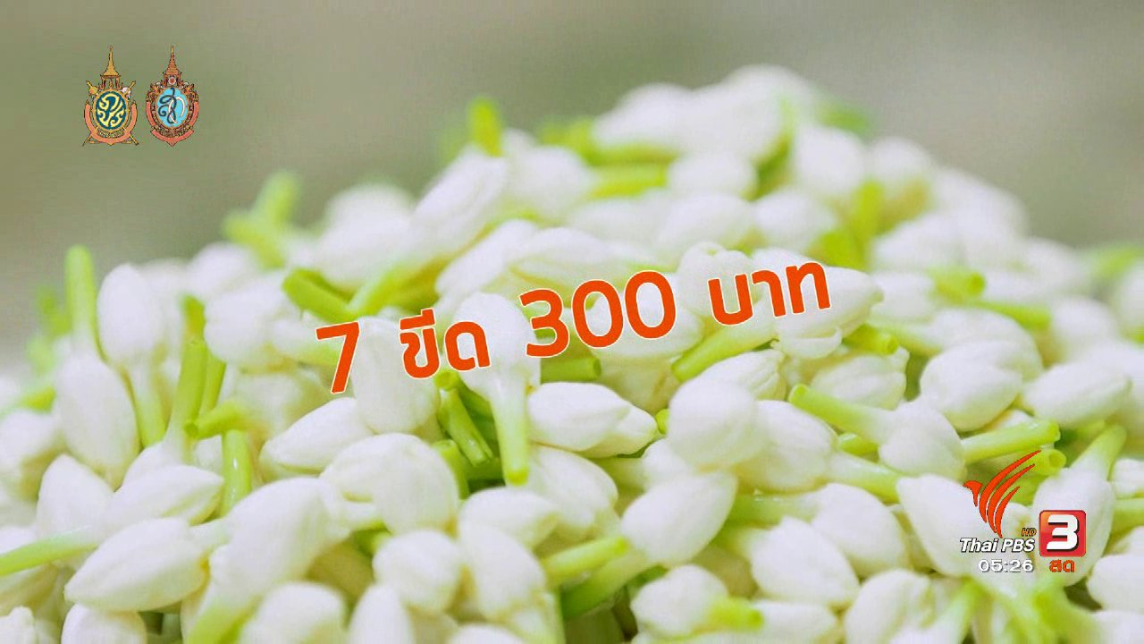 วันใหม่  ไทยพีบีเอส - สายสืบเจาะตลาด : สำรวจราคาดอกมะลิ