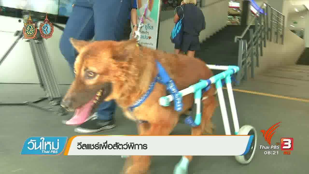 วันใหม่  ไทยพีบีเอส - บอกเล่าข่าวดี : อุปกรณ์วีลแชร์ช่วยสัตว์พิการ