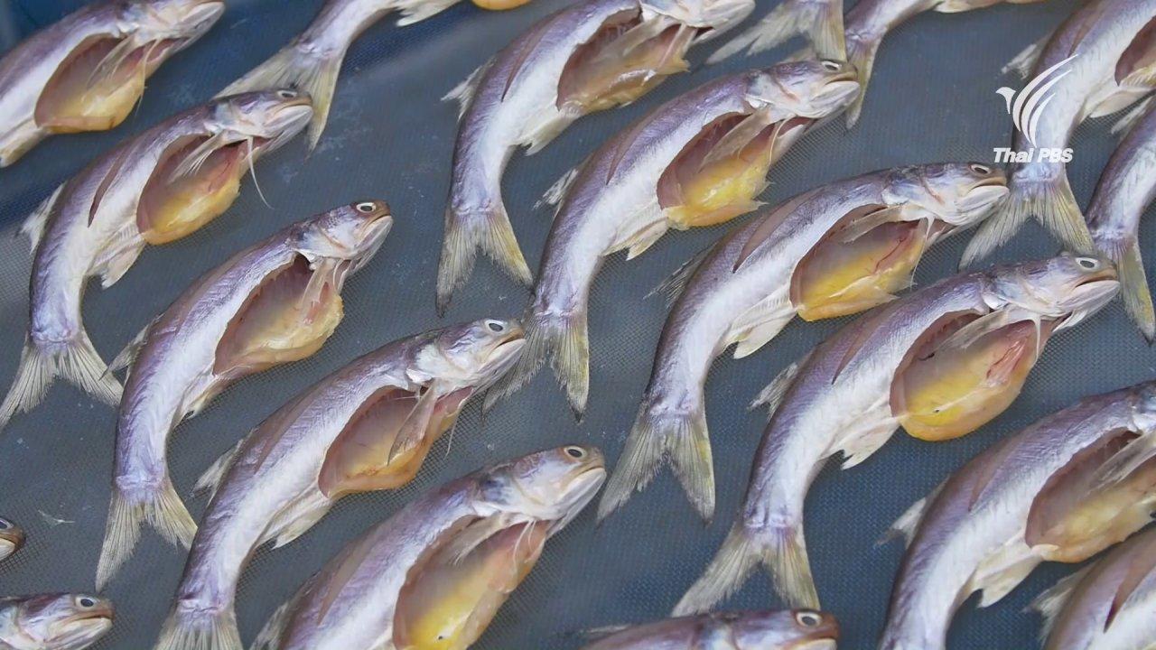 กินอยู่คือ - ปลากุเลาแดดเดียว