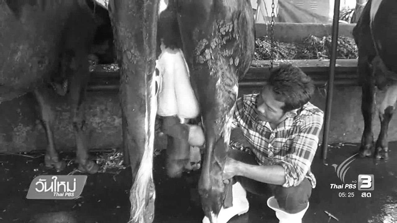 วันใหม่  ไทยพีบีเอส - เกษตรกรโคนมสุโขทัยยึดหลักเศรษฐกิจพอเพียง
