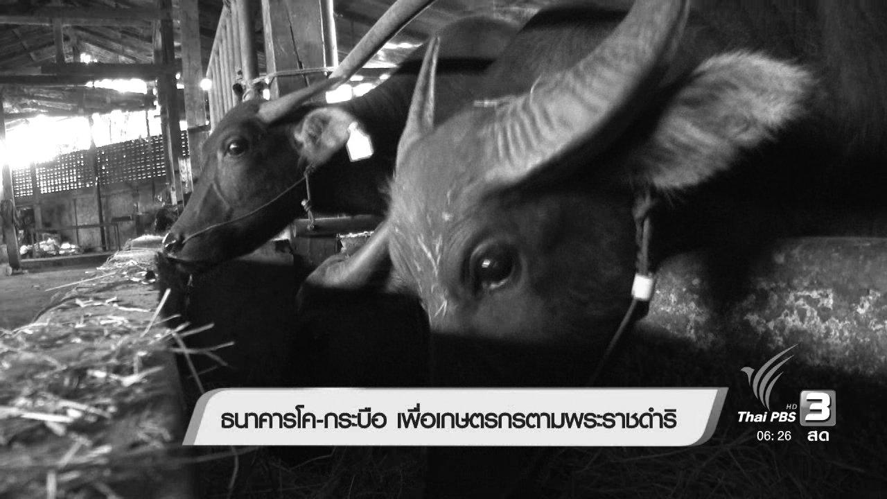 วันใหม่  ไทยพีบีเอส - ธนาคารโค-กระบือ เพื่อเกษตรกรตามพระราชดำริ