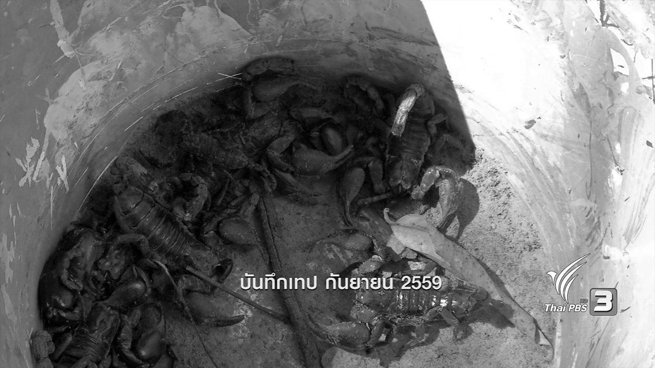 ข่าวค่ำ มิติใหม่ทั่วไทย - ตะลุยทั่วไทย : แมงป่องช้าง