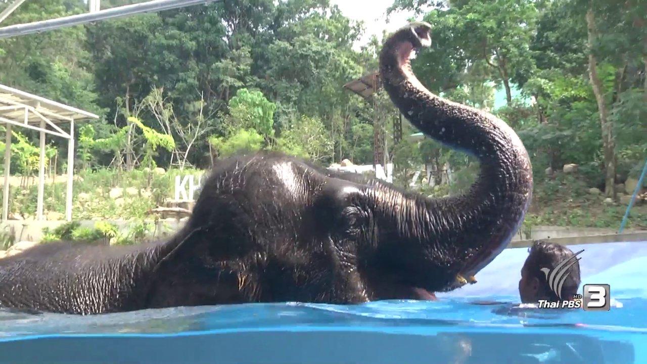 บ้านนักวิทยาศาสตร์น้อย - การว่ายน้ำของสัตว์