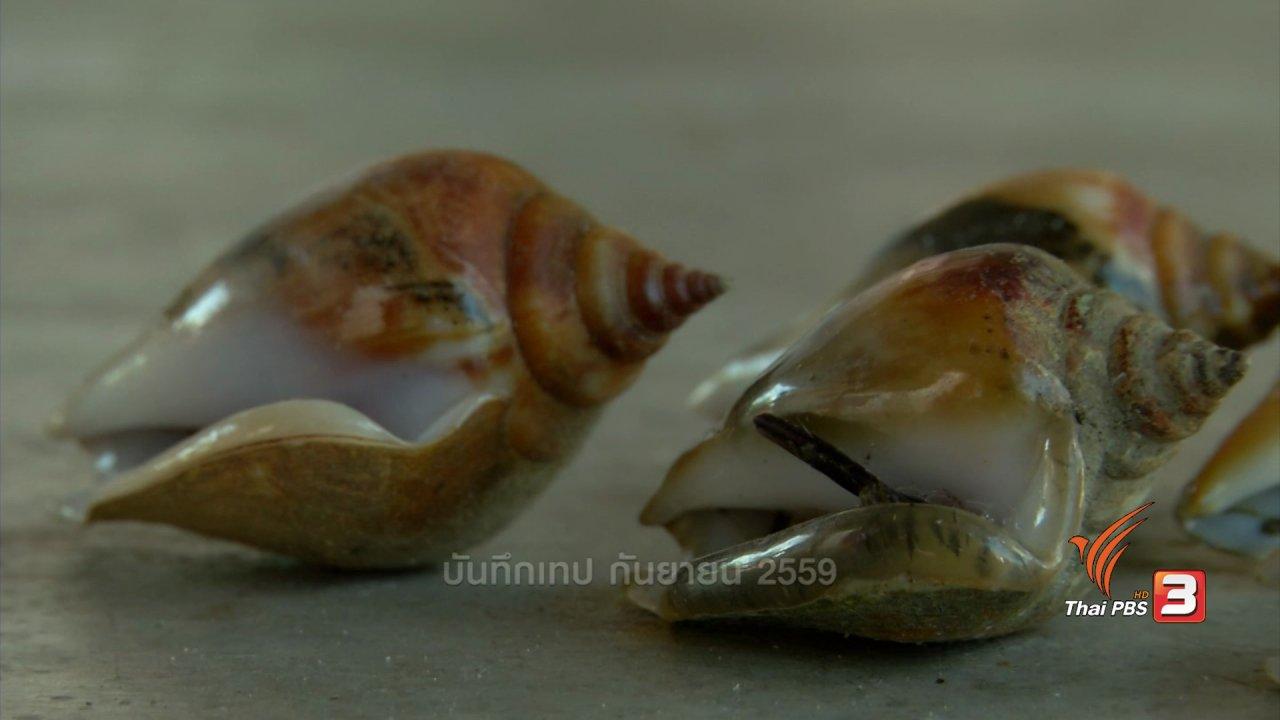 ข่าวค่ำ มิติใหม่ทั่วไทย - ตะลุยทั่วไทย : หอยชักตีน