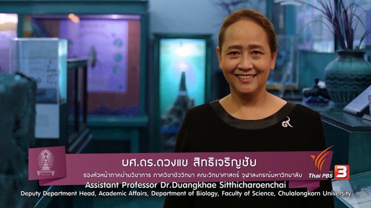 ข่าวค่ำ มิติใหม่ทั่วไทย - soเชี่ยว FAKE or FACT : ใช้ผงบอแรกซ์ฆ่าแมลงสาบได้จริงหรือไม่
