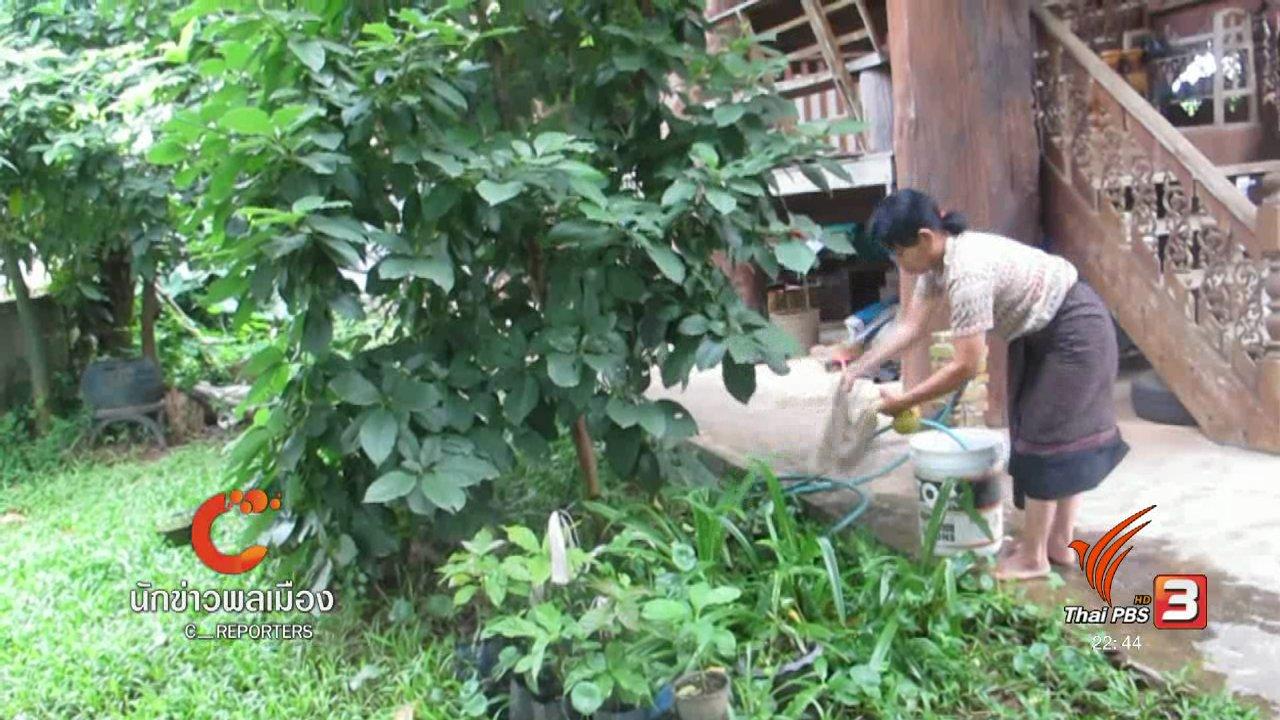 ที่นี่ Thai PBS - นักข่าวพลเมือง : เมล็ดพันธุ์คืออาหาร อาหารคือชีวิต