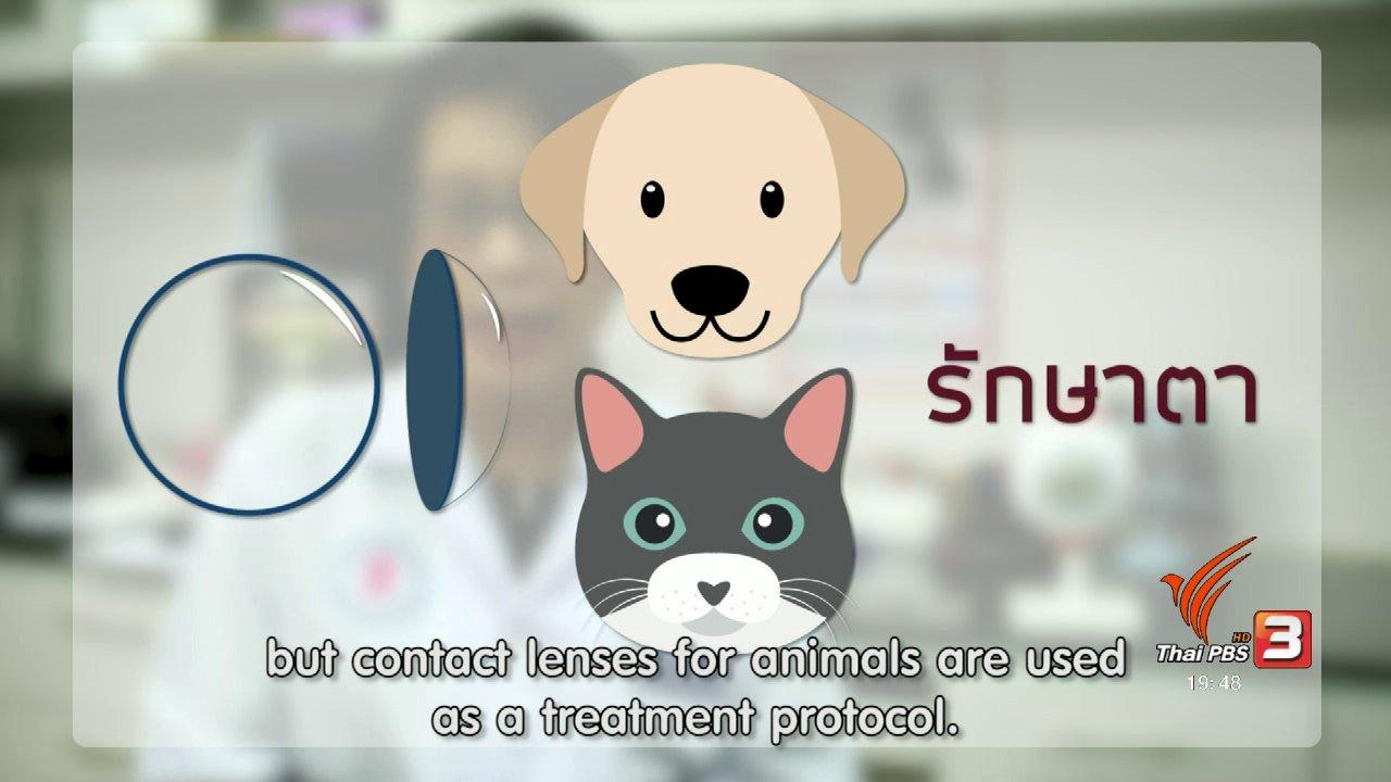 ข่าวค่ำ มิติใหม่ทั่วไทย - soเชี่ยว FAKE or FACT : คอนแทกเลนส์มีส่วนช่วยรักษาแมวที่กระจกตาอักเสบจริงหรือไม่