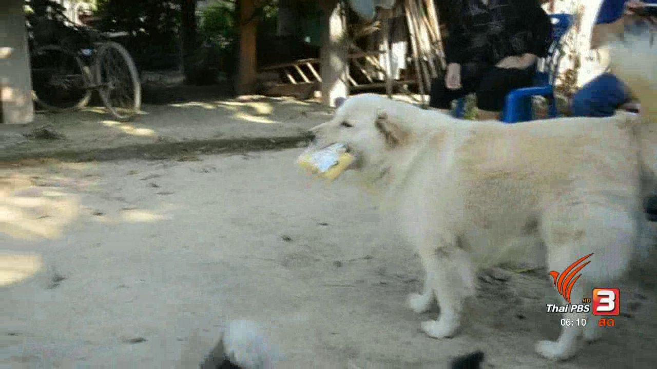 วันใหม่  ไทยพีบีเอส - สุนัขแสนรู้ทำงานแลกเงินซื้อขนมกิน