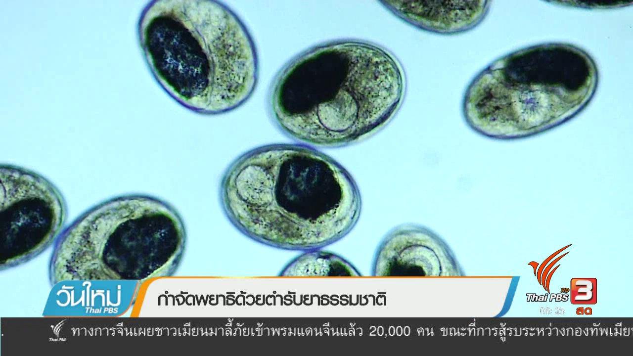 วันใหม่  ไทยพีบีเอส - 108 สุขภาพ : กำจัดพยาธิด้วยตำรับยาธรรมชาติ