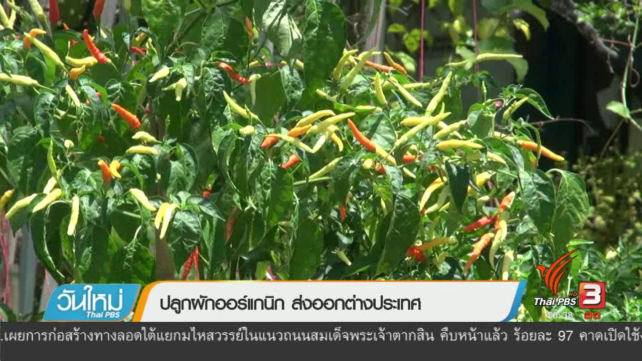 วันใหม่  ไทยพีบีเอส - ลงทุนทำกิน : ปลูกผักออร์แกนิก ส่งออกต่างประเทศ