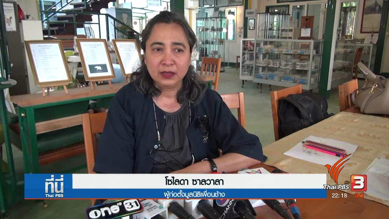 """ที่นี่ Thai PBS - ยังไม่ปิด """"มูลนิธิเพื่อนช้าง"""""""