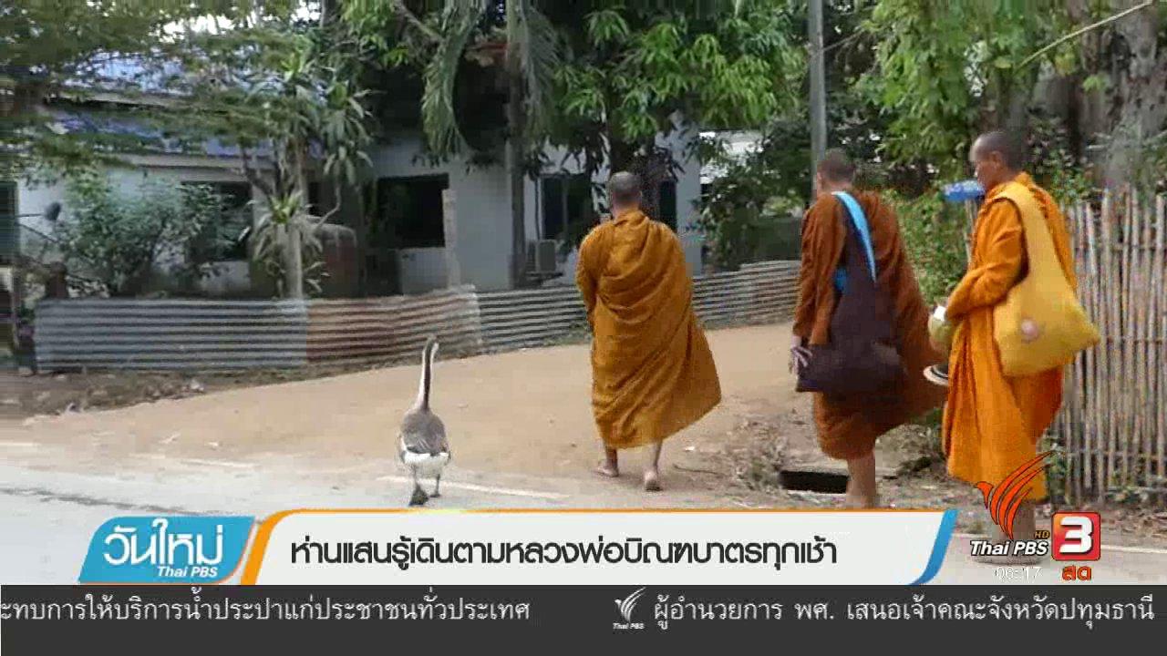 วันใหม่  ไทยพีบีเอส - ห่านแสนรู้เดินตามหลวงพ่อบิณฑบาตรทุกเช้า