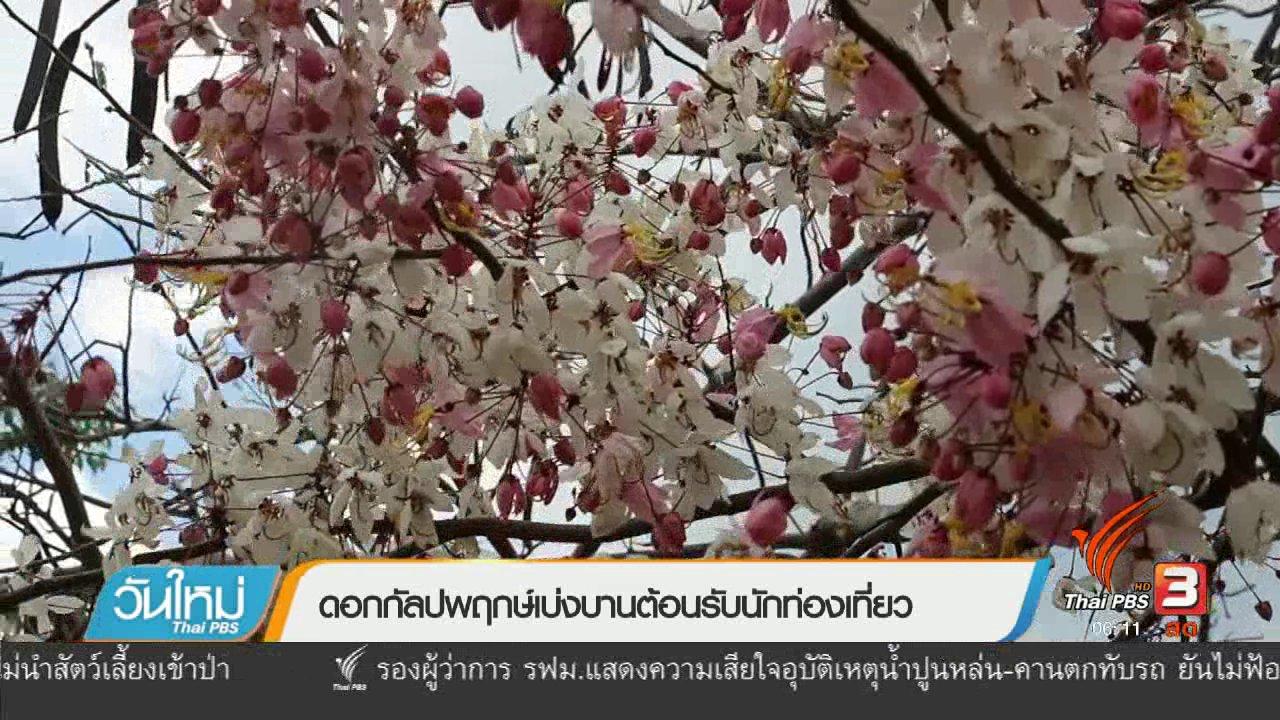วันใหม่  ไทยพีบีเอส - ดอกกัลปพฤกษ์เบ่งบานต้อนรับนักท่องเที่ยว