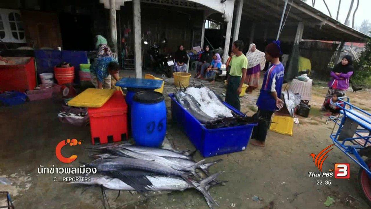 """ที่นี่ Thai PBS - นักข่าวพลเมือง : """"ปลากระโทง"""" ความอุดมสมบูรณ์ที่ปะนาเระ"""