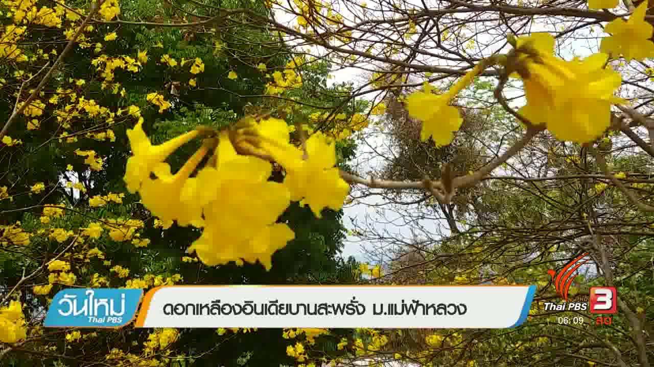 วันใหม่  ไทยพีบีเอส - ดอกเหลืองอินเดียบานสะพรั่ง ม.แม่ฟ้าหลวง