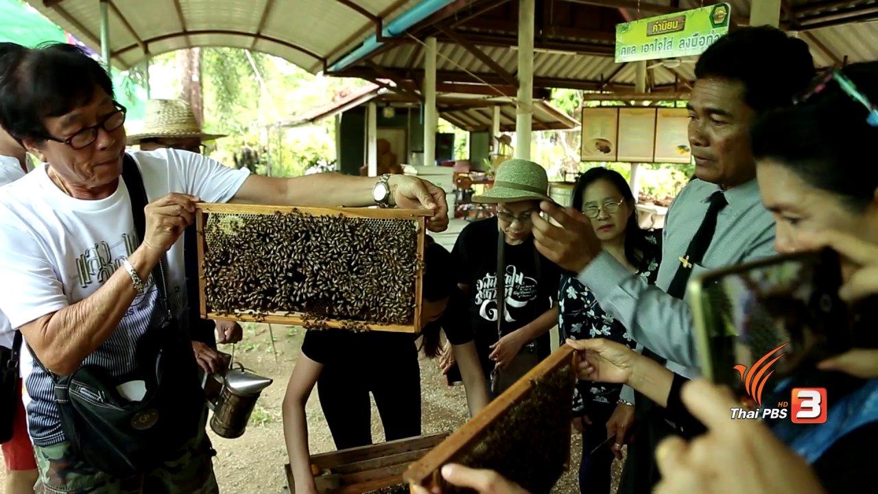 คนสู้โรค - เก๋ายกก๊วน : นานาประโยชน์จากผึ้ง