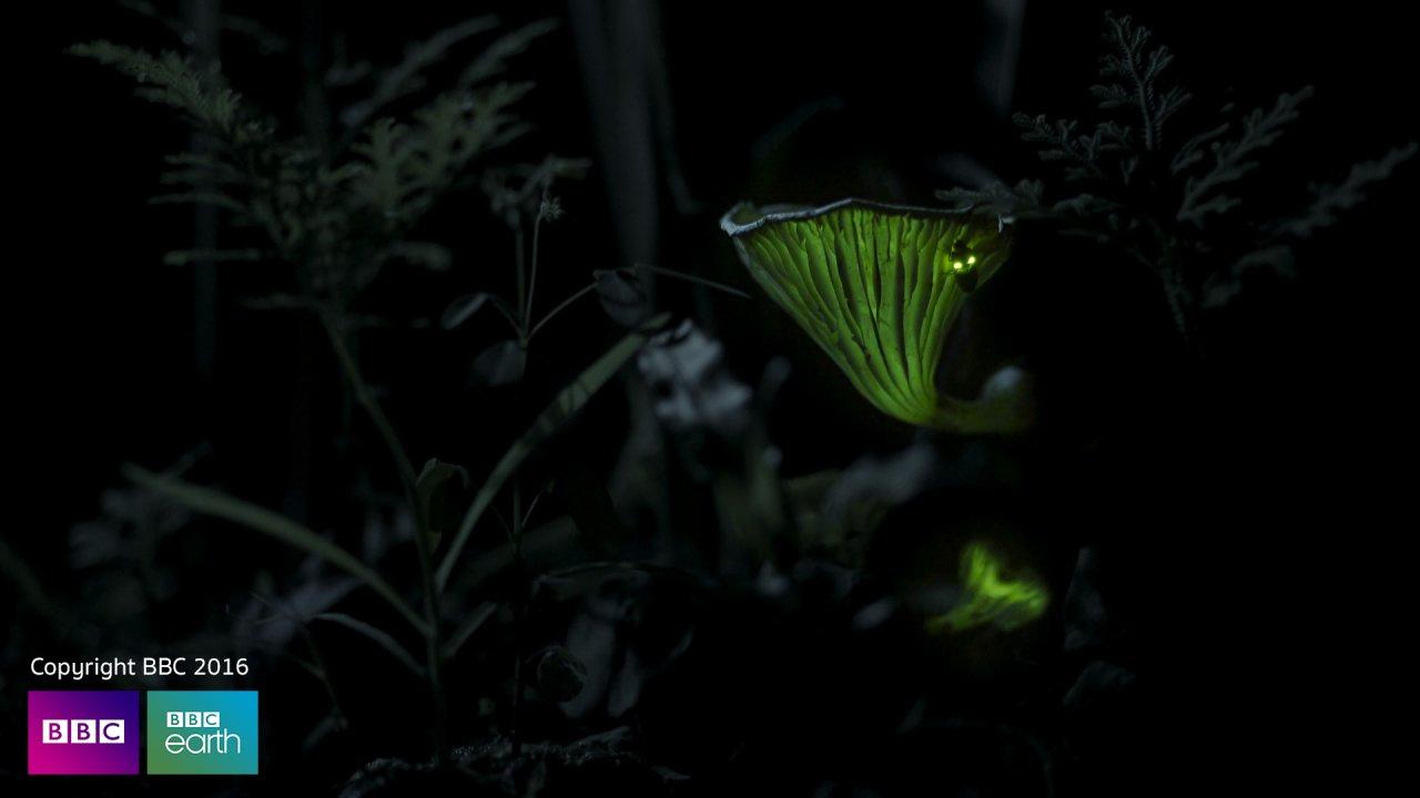พิภพมหัศจรรย์  Planet Earth II - เห็ดเรืองแสง